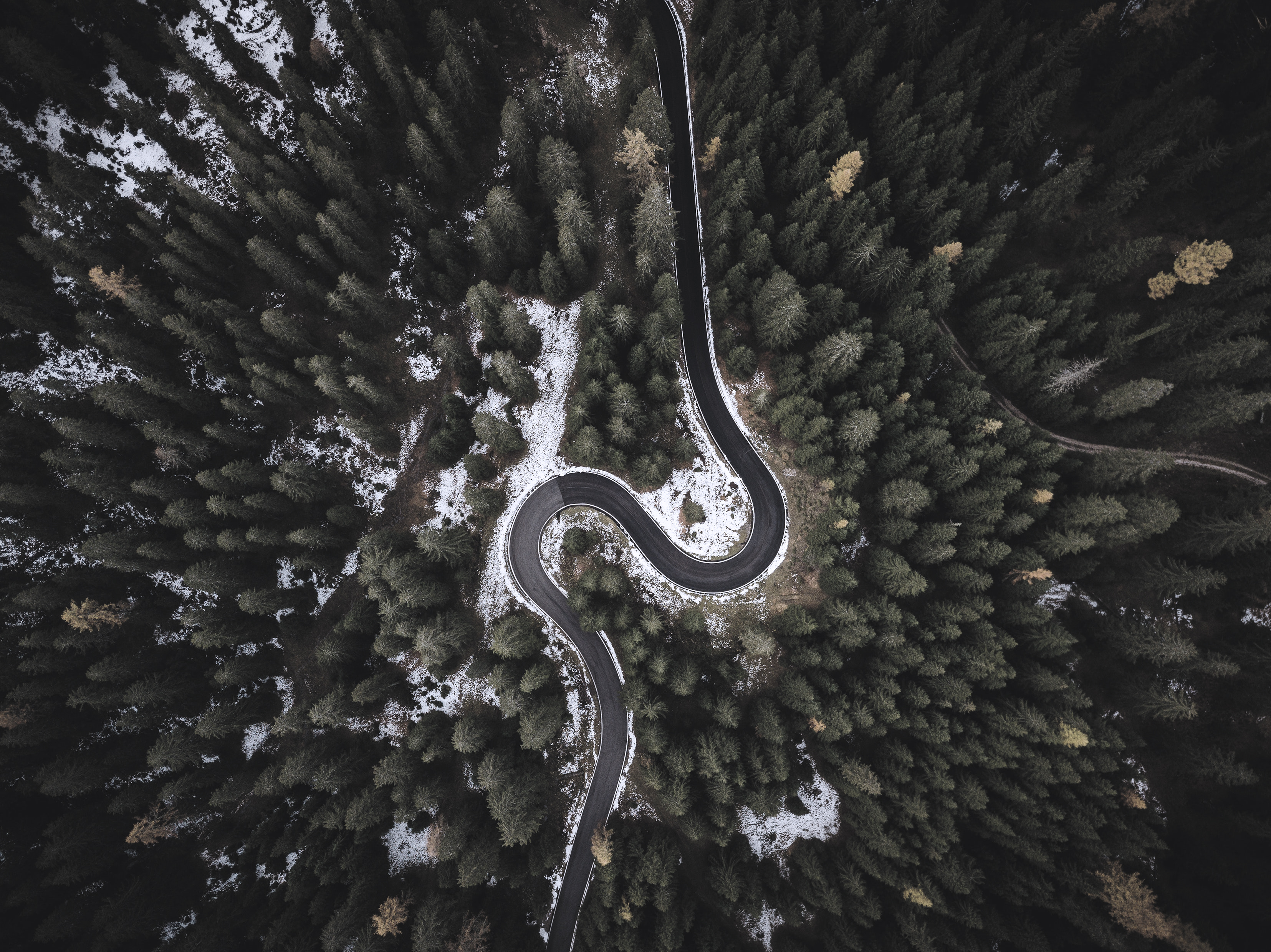 bird-s-eye-view-conifers-curve-1624600